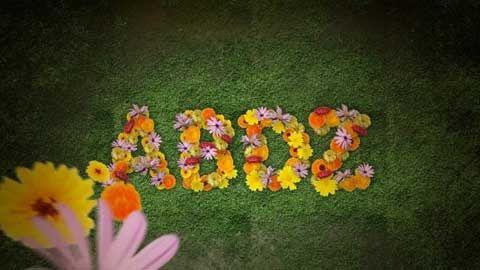 abdz-flower