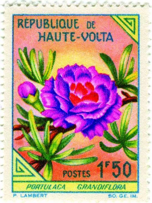 1963 Upper Volta - Moss Rose