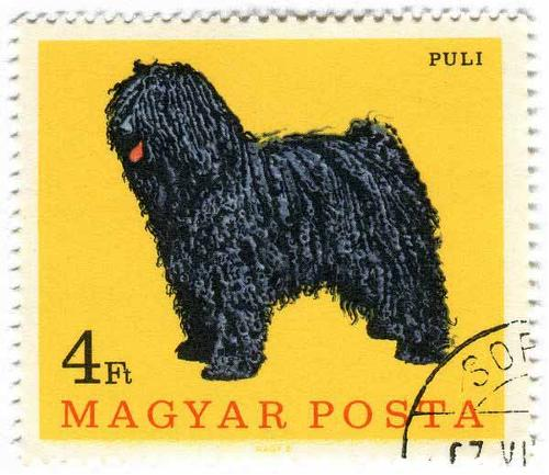 1967 Hungary - Puli Dog