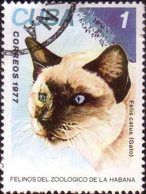 1977 Cuba - Felis Catus
