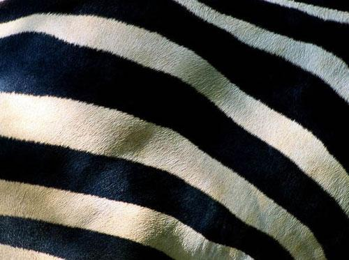 Photography Of Strange Patterns In Nature - animals 1