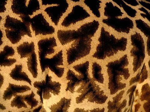 Photography Of Strange Patterns In Nature - animals 3
