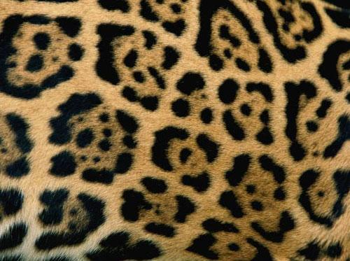 Photography Of Strange Patterns In Nature - animals 5