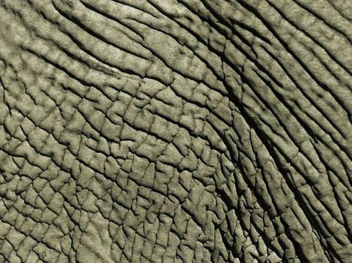 Photography Of Strange Patterns In Nature - animals 7