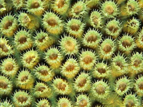Photography Of Strange Patterns In Nature - corals 2