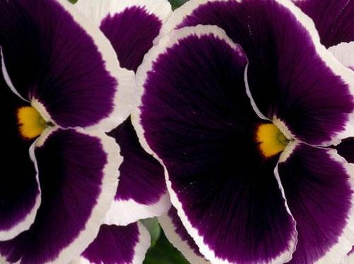 Photography Of Strange Patterns In Nature - flowers 1
