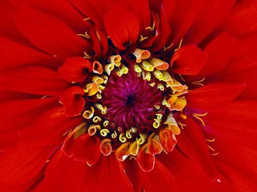 Photography Of Strange Patterns In Nature - flowers 5