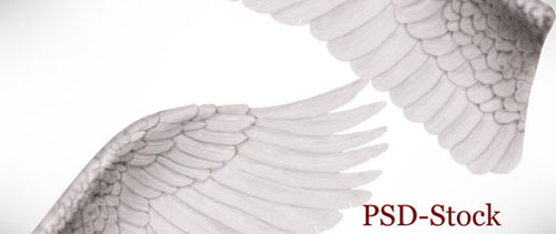 Angel wings free psd file