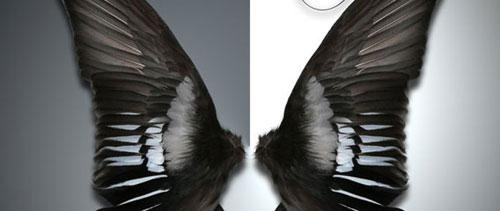 Dark wings free psd file
