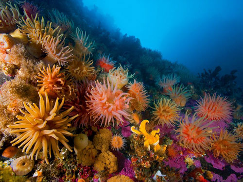 Anemones soft corals photography