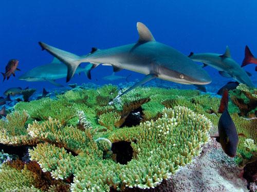 kingman reef skerry photography