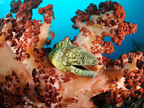 moray eel japan skerry photography